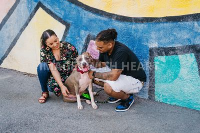 Pit Bull and Family in City by Mural