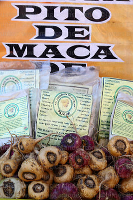 Fresh Lepidium meyenii / maca and bags of powdered maca with a list of its mineral and vitamin content