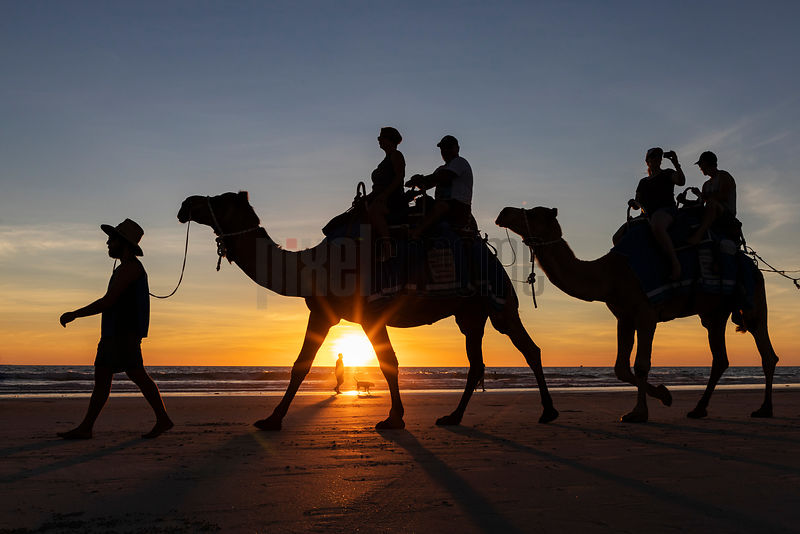 Camel Rides on Cable Beach at Sunset