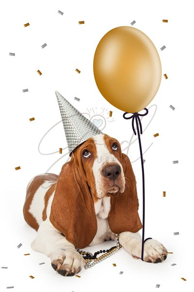 Party Basset Hound With Balloon