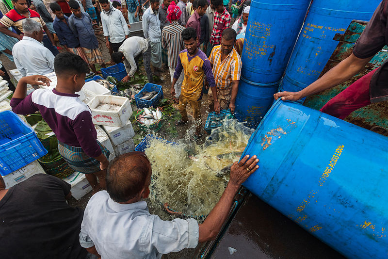 Unloading Fish from a Barrel to be taken to be Sold at the Fisheri Ghat Market
