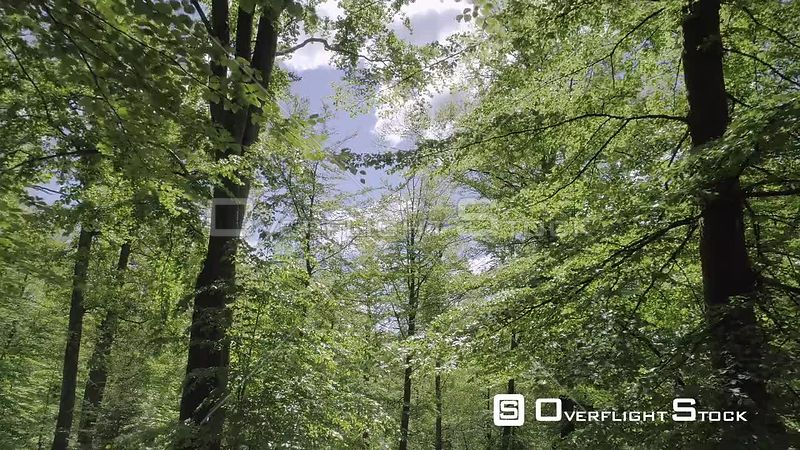 Drone Flight Through Interior of a Beech Forest in Sweden