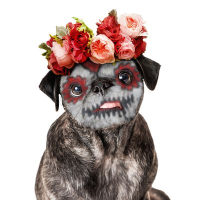 Funny Day of the Dead Dog