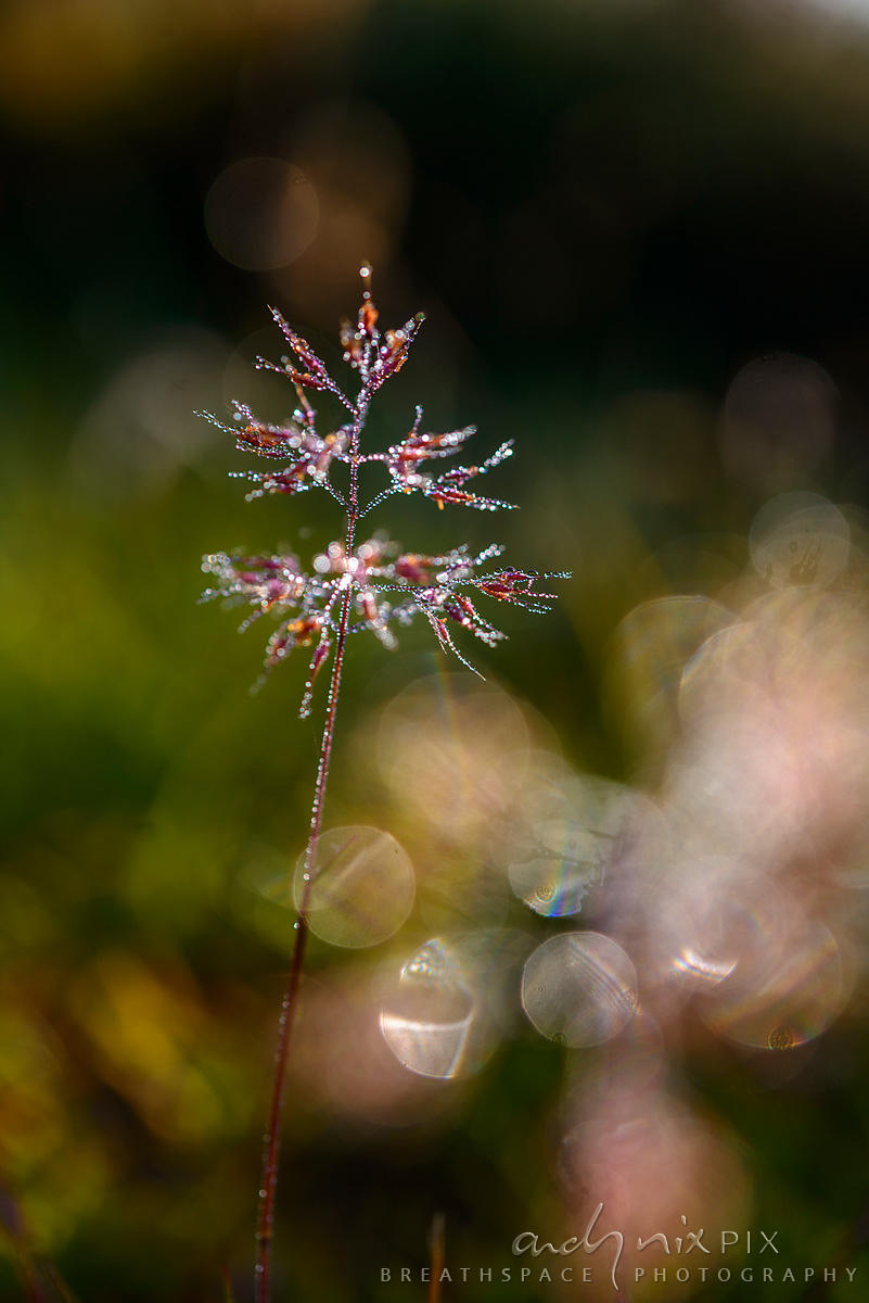 Wall Art Decor Photo Print: Jewel Grass