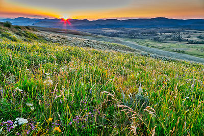 Meadow At Sunrise, Yellowstone National Park.