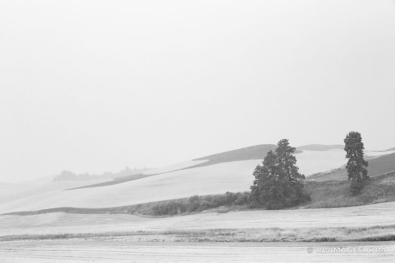 HAZY MORNING PALOUSE EASTERN WASHINGTON STATE BLACK AND WHITE