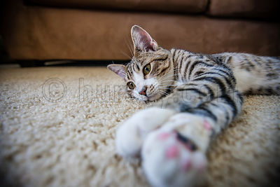 DH_Cats-0497