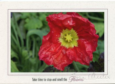 greeting_cards295