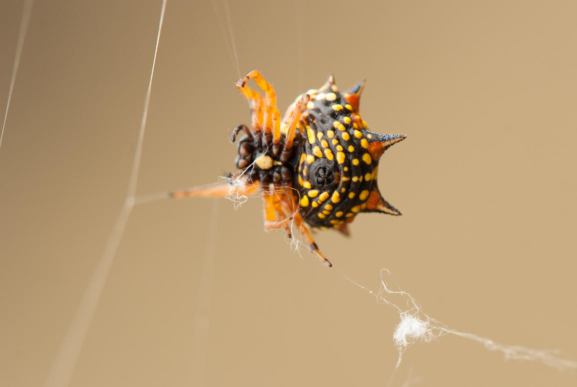 Spide_with_web-1