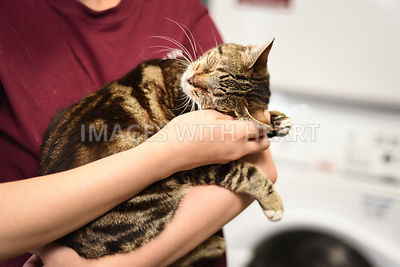 Tabby cat held in young woman's arms.