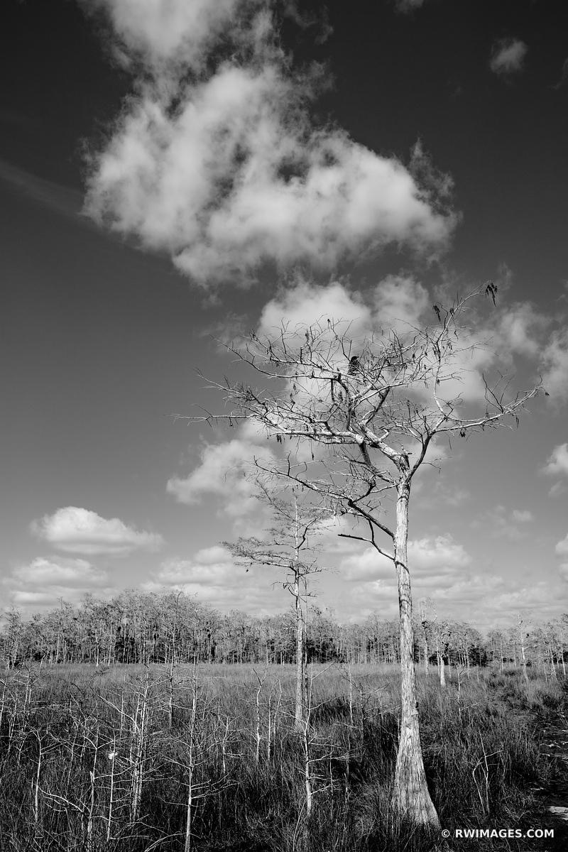 PRAIRIE CYPRESS TREES GATOR HOOK TRAIL BIG CYPRESS NATIONAL PRESERVE EVERGLADES FLORIDA BLACK AND WHITE VERTICAL