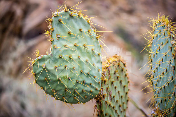 A cactus in the desert of Joshua Tree National Park
