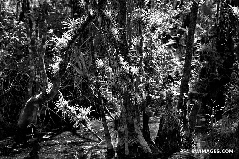 FAKAHATCHEE STRAND FLORIDA BLACK AND WHITE