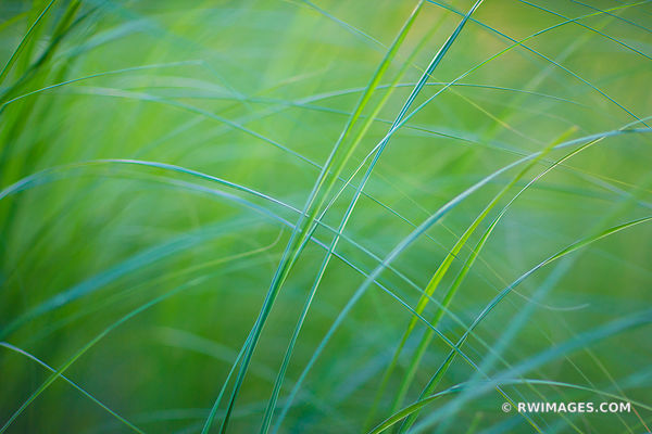 TALLGRASS PRAIRIE BOTANICALS NATURE ABSTRACT