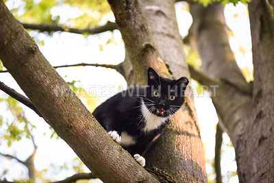Black and white cat in tree