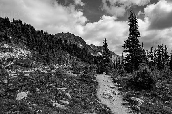 Black and white photo of a hiking trail leading into Blackcomb Mountain, Whistler, Canada