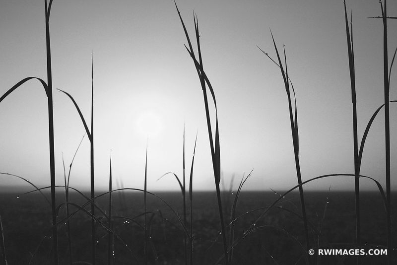PRAIRIE SUNRISE BLACK AND WHITE CENTRAL ILLINOIS MIDWESTERN PRAIRIE FARMLAND CORNFIELD