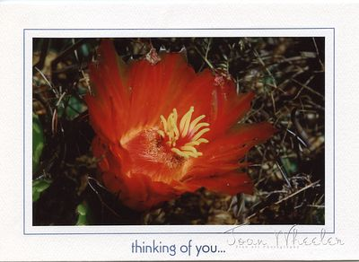 greeting_cards290
