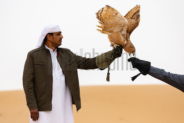 Handlers Khan and César Work with a Pharaoh Eagle-owl (Bubo ascalaphus)