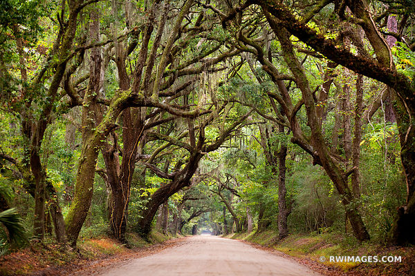 BOTANY BAY ROAD EDISTO ISLAND SOUTH CAROLINA SOUTHERN FOREST LANDSCAPE