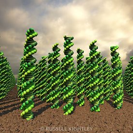 DNA Farming: DNA helices are grown like wheat or vines in a rich and fertile soil. Conceptual illustration for topics like GM...