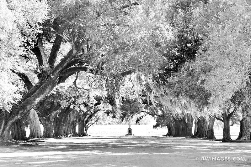 OAK ALLEY OF ST. JOSEPH MANRESA HOUSE OF RETREATS LOUISIANA BLACK AND WHITE