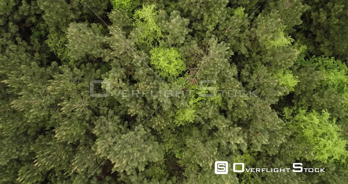 Top down view of dense green woodland forest, Texas, USA