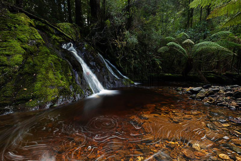 Tarkine Forest Waterfall