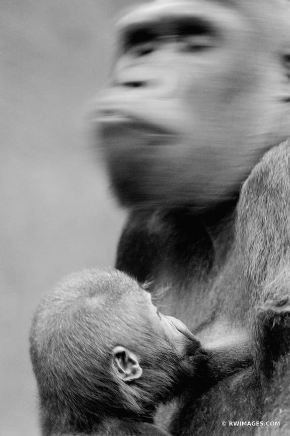 MOTHERHOOD | GORILLAS BLACK AND WHITE VERTICAL
