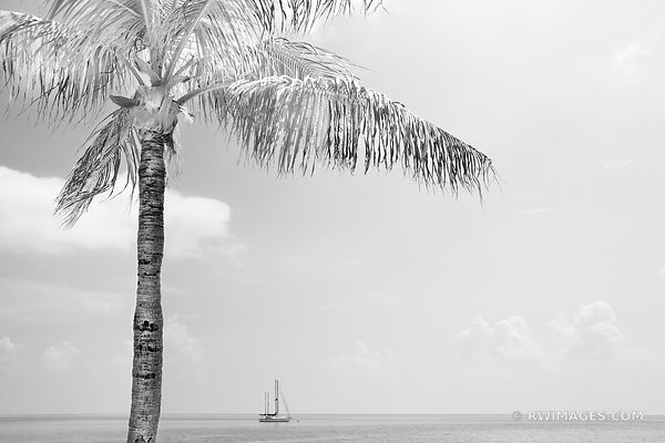 PALM TREE SAILBOAT OCEAN ISLAMORADA FLORIDA KEYS FLORIDA BLACK AND WHITE