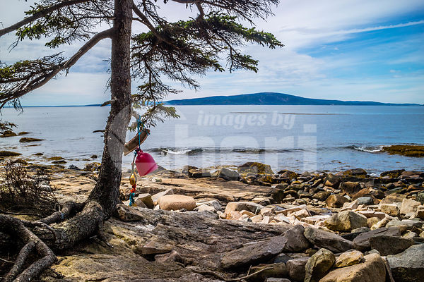 A Boat Fender hang on the tree of Acadia National Park, Maine