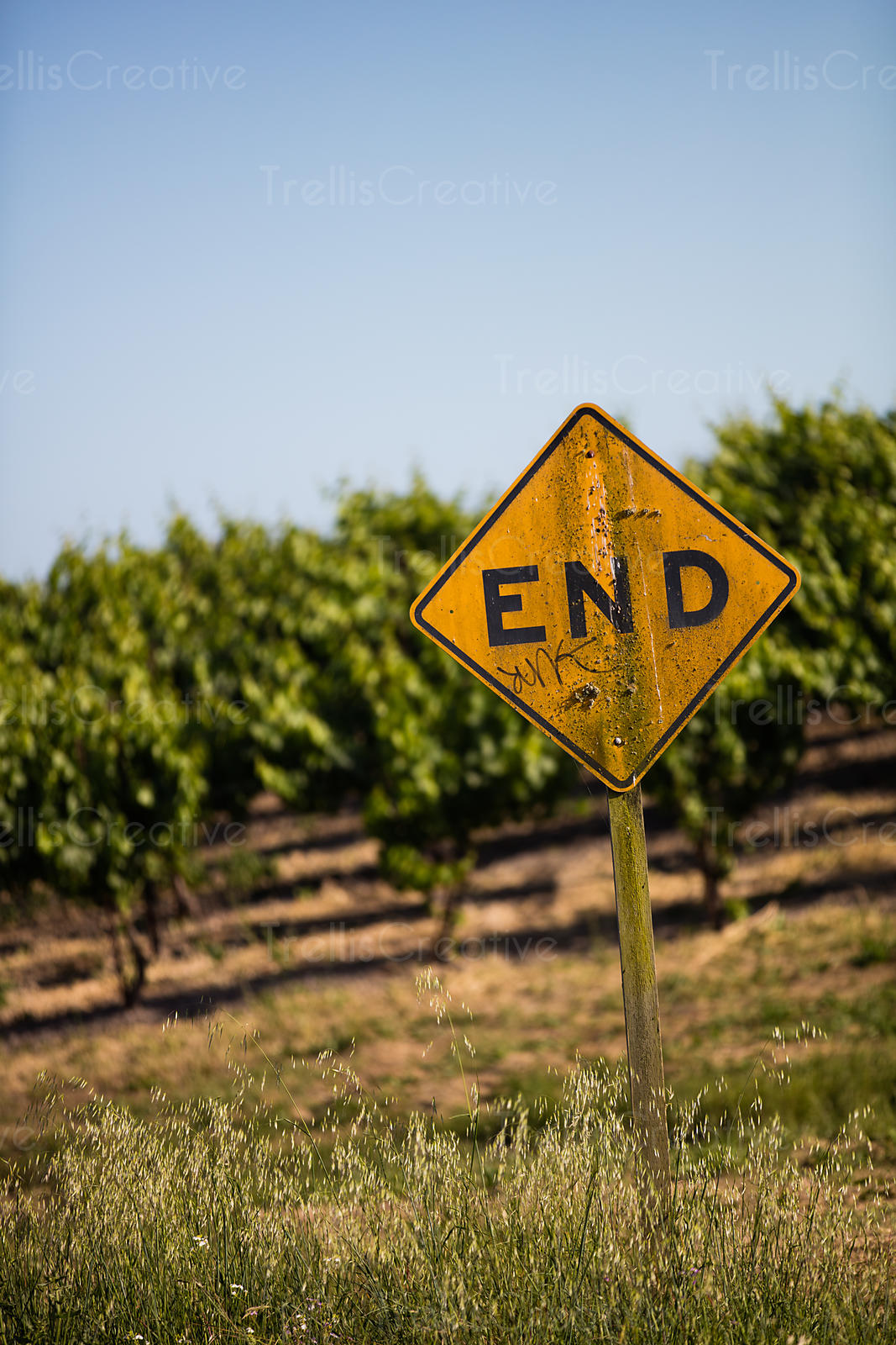 End of the Road sign in front of vineyard, Napa Valley, California, USA.