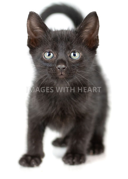 Black kitten with green eyes on white background