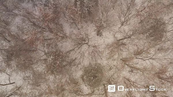 Top Down View of a Snow Covered Forest, Cameron, Missouri, USA