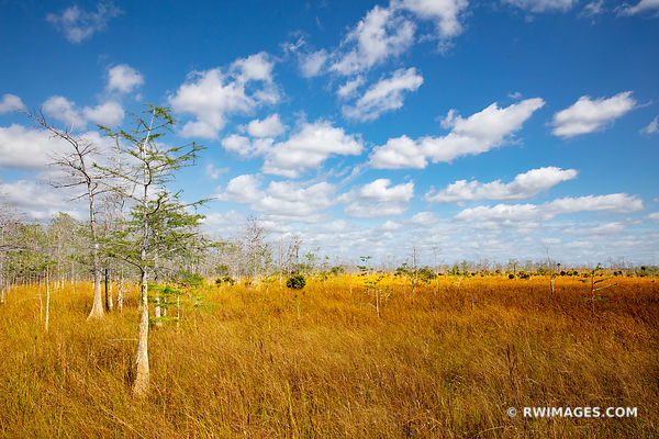 PRAIRIE DWARF CYPRESS TREES LOOP ROAD BIG CYPRESS NATIONAL PRESERVE EVERGLADES FLORIDA