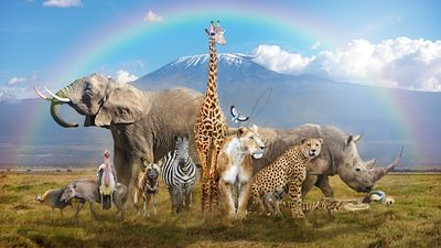 Magical African Wildlife Safari Scene