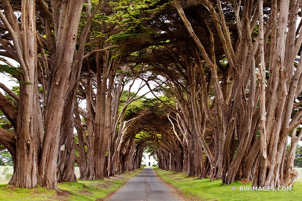 CYPRESS TREE TUNNEL POINT REYES NATIONAL SEASHORE CALIFORNIA