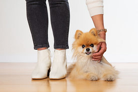 Woman Leans Over to Pet Pomeranian