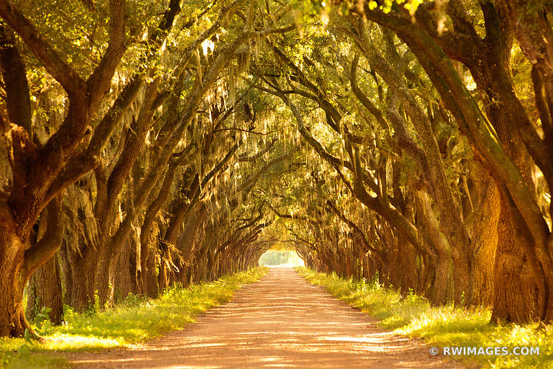 OAK ALLEY NEAR RIVER ROAD LOUISIANA COLOR