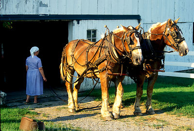 Amish and Family Farming