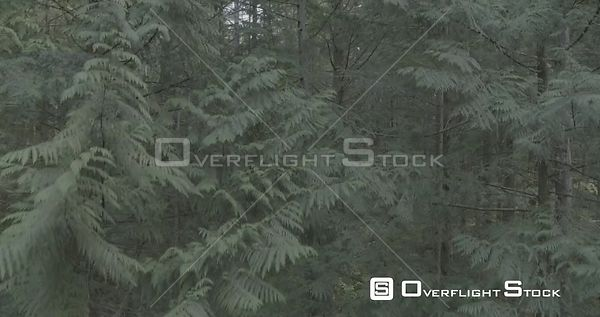 British Columbia Canada Rain Forest Inside Forest Fly Through