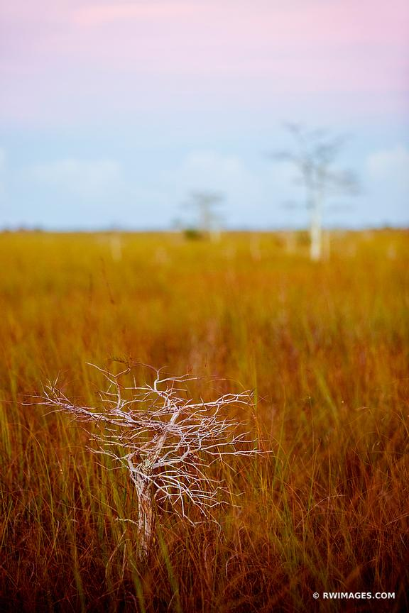 DWARF CYPRESS AND SAWGRASS PRAIRIE PA-HAY-OKEE OVERLOOK EVERGLADES NATIONAL PARK FLORIDA VEERTICAL COLOR LANDSCAPE