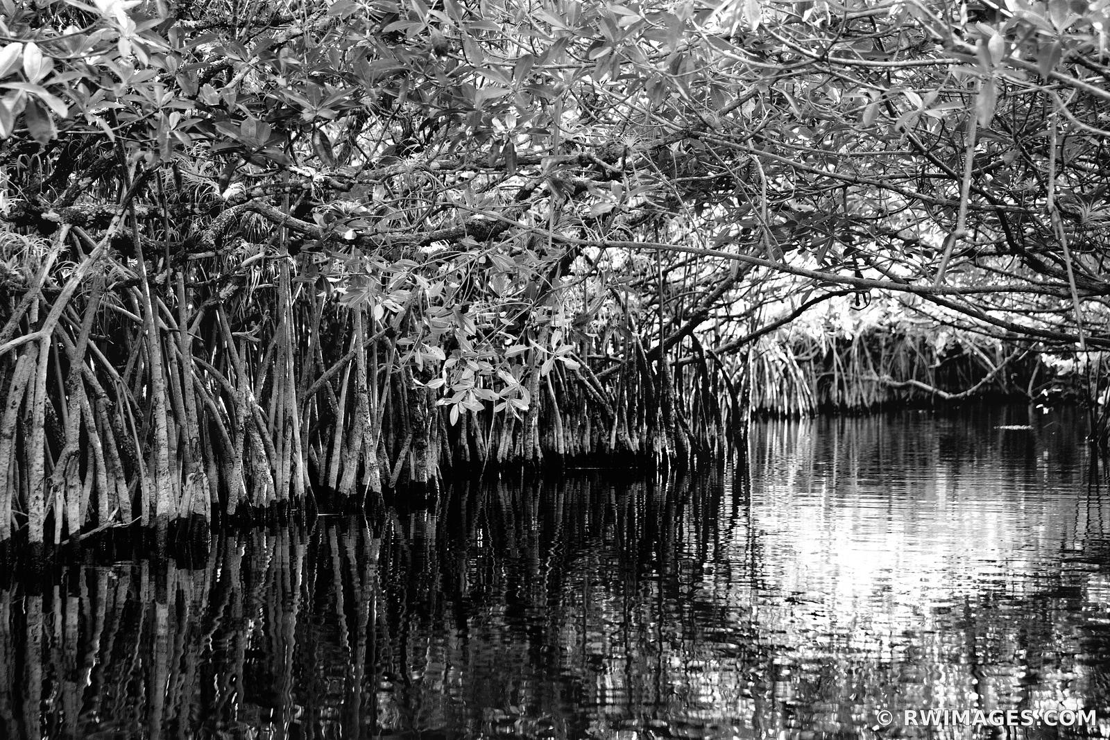 MANGROVE TUNNEL BROMELIADS TURNER RIVER CANOE TRAIL BIG CYPRESS NATIONAL PRESERVE EVERGLADES FLORIDA BLACK AND WHITE