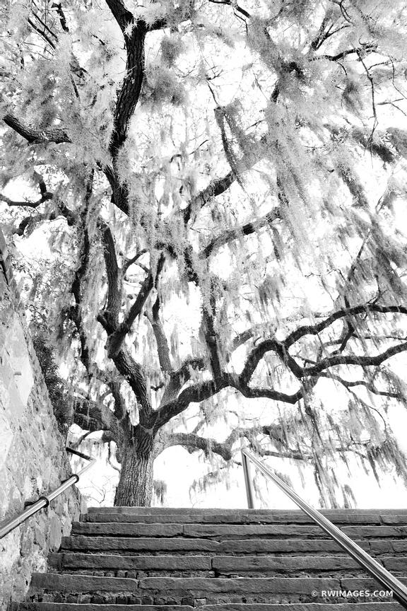 OAK TREE SPANISH MOSS STAIRS SAVANNAH GEORGIA BLACK AND WHITE VERTICAL
