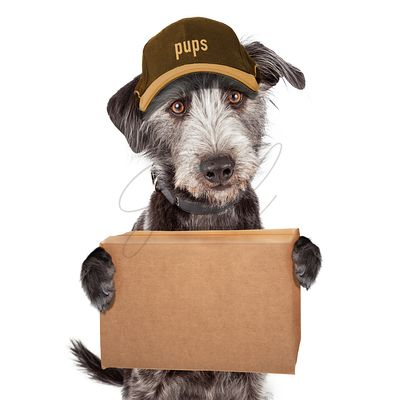 Funny Dog Delivering Package in Cardboard Box
