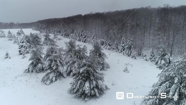 Winter Snow Forest Scenic Michigan Drone Aerial View
