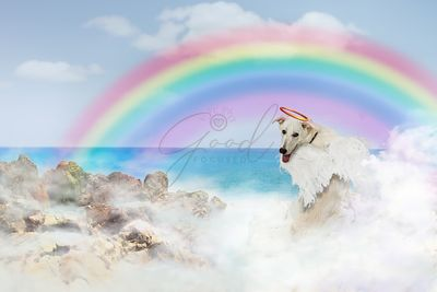 Angel Dog Over Rainbow Bridge