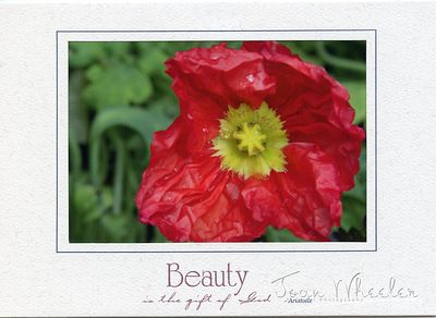 greeting_cards289