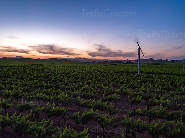 Aerial drone photo of vineyards along Highway 121 at sunset, Napa Valley, California, USA.