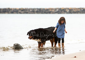 A young brown-haired girl in denim dress and her Bernese Mountain Dog both stand in shallow surf looking down at the water fo...
